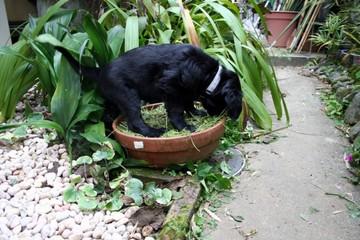 2008_11_2_maya4