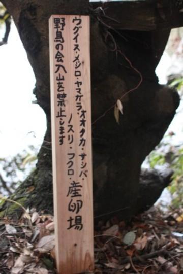 2009_2_243
