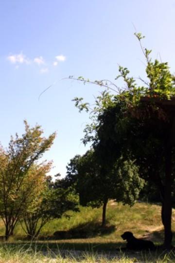 2009_9_121