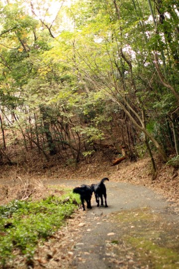 2009_11_59