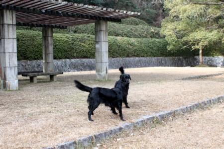 2011_02_061