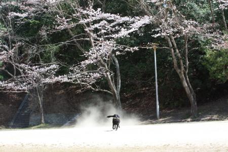 2011_04_072