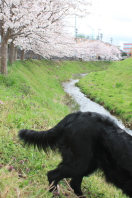 2011_04_094