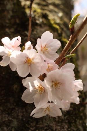 2012_04_1217_2