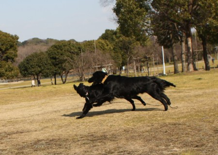 2010_01_295